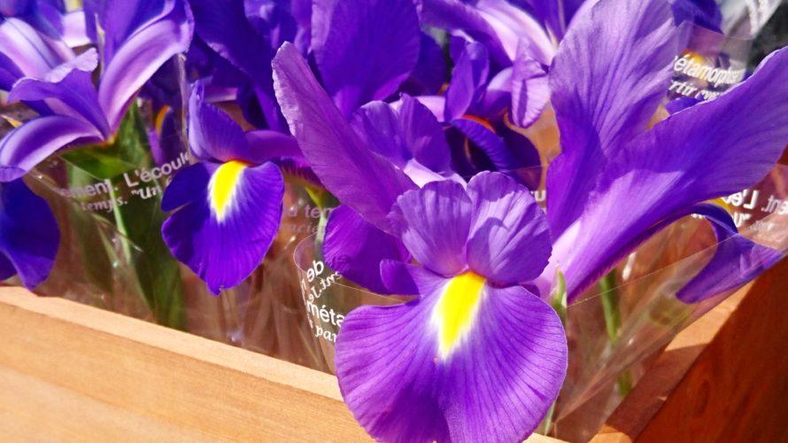 今日は子供の日(^-^) ご来店のお客様に綺麗に咲いたアイリスをプレゼント致します♪ 皆さまお気をつけてお越しくださいませ❤️